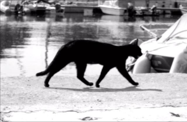 Pasarea Colibri – Pisica neagra